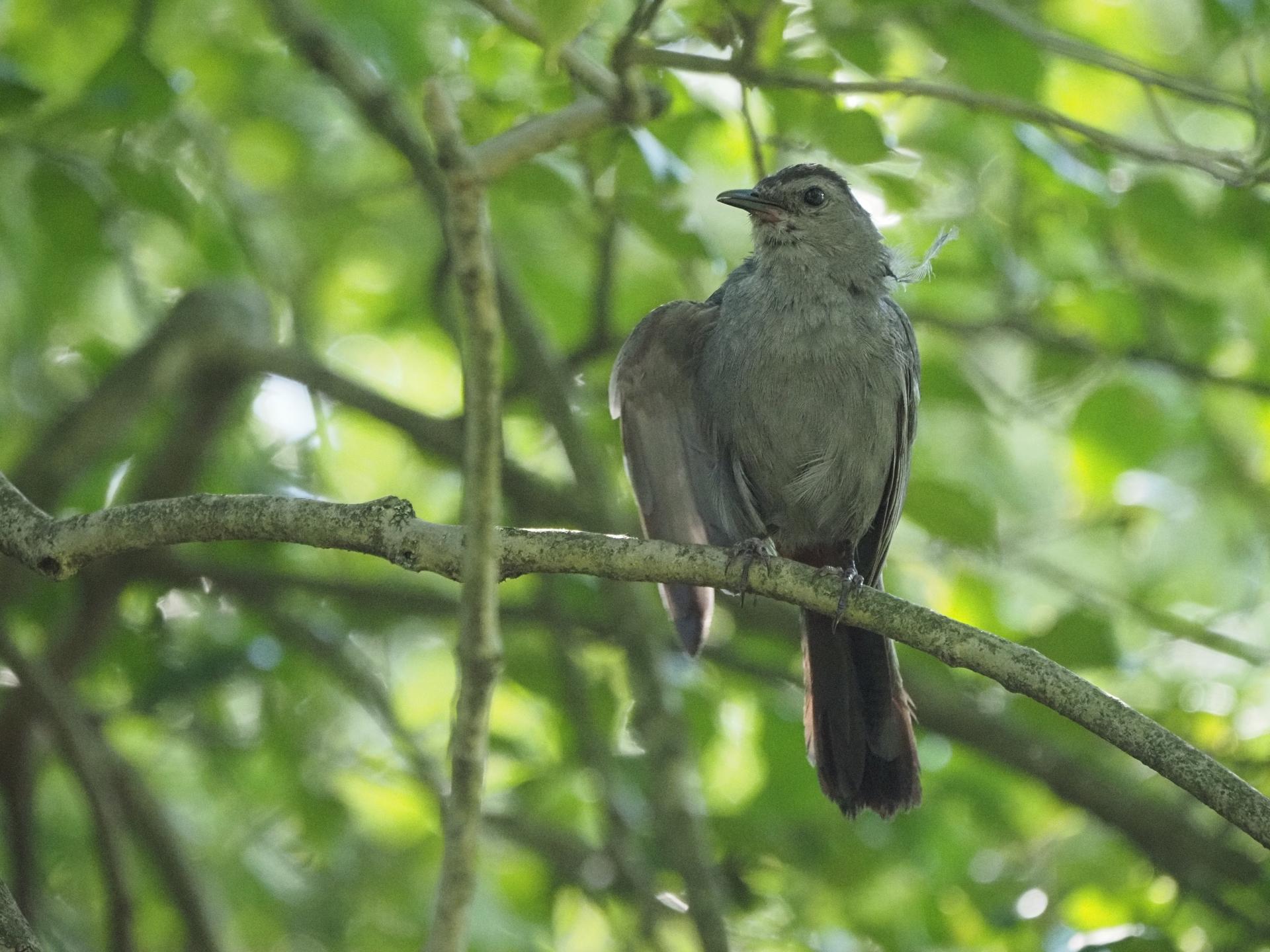 Flycatcher Fervor & Westward Wanderlust